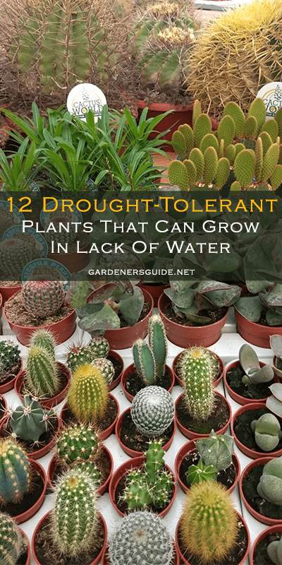12 Common Plants That Can Survive In Drought - 12 Common Plants That Can Survive In Drought