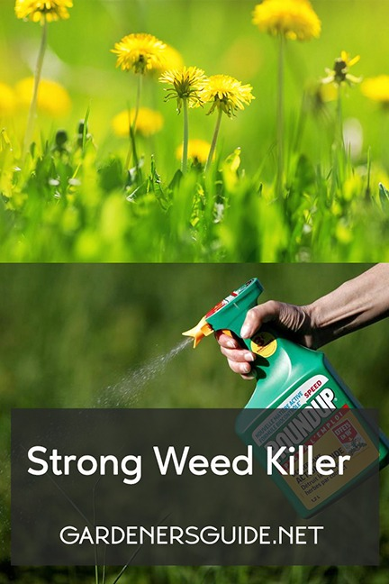 Strong Weed Killer Options To Choose From
