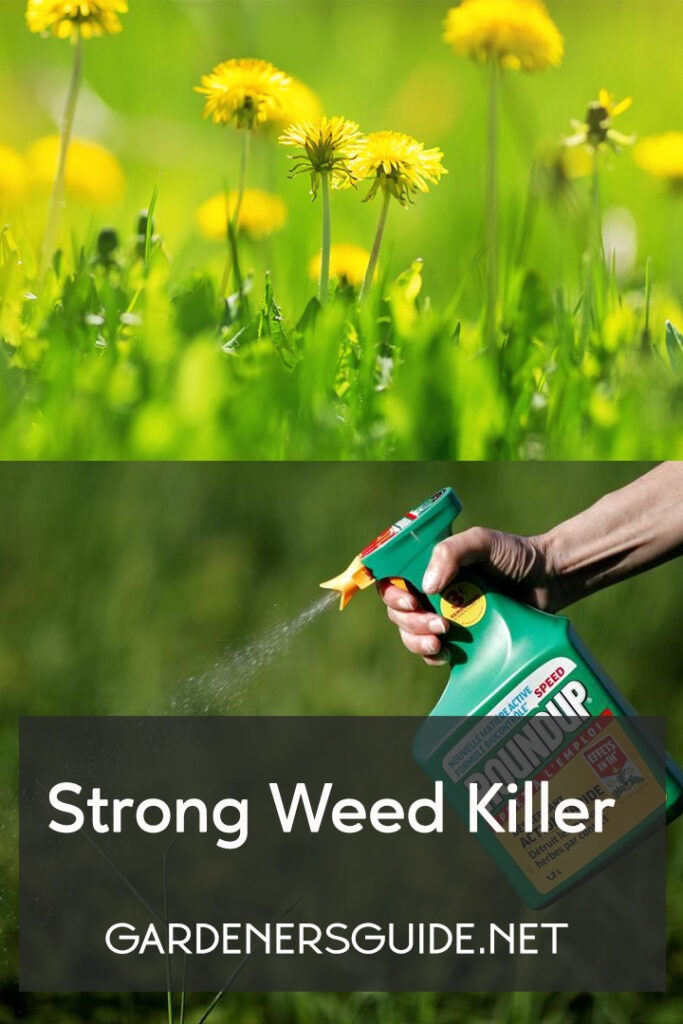 StrongWeedKiller 3 683x1024 - Strong Weed Killer Options To Choose From