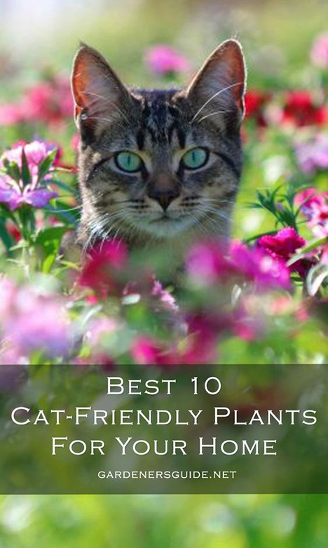 best 10 cat friendly plants for your home 1 - 10 Best Cat Friendly Houseplants For Your Home