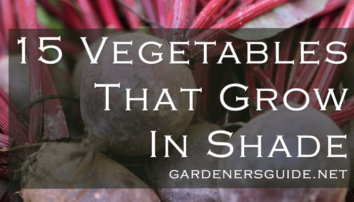 15 Vegetables That Grow In Shade