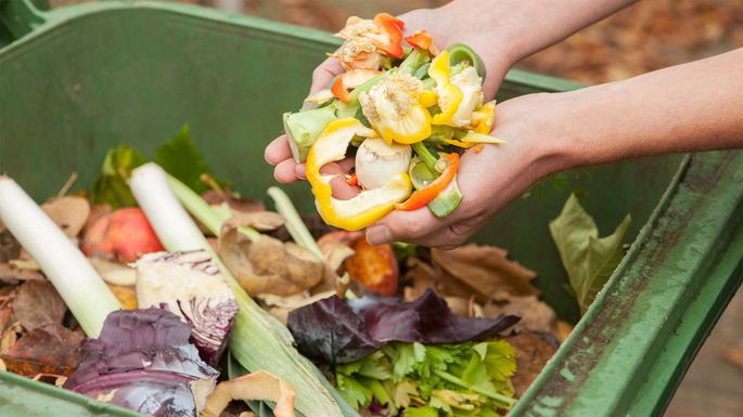 Garbage Bin: Your Treasure Chest for Homemade Fertilizers