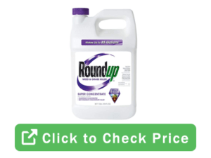 roundup  300x225 - Strong Weed Killer Options To Choose From