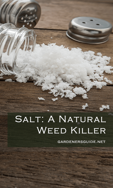 salt natural weed killer - Salt: A Natural Weed Preventer