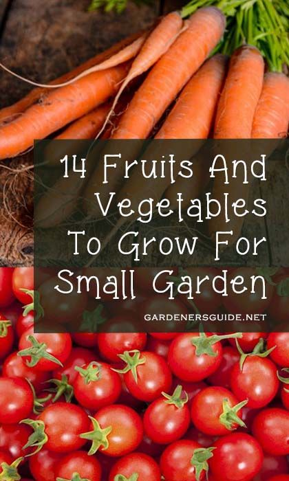 26b9df3a2b6498ea236f8a8019f74d2d - 14 Fruits And Vegetables To Grow For Your Small Garden