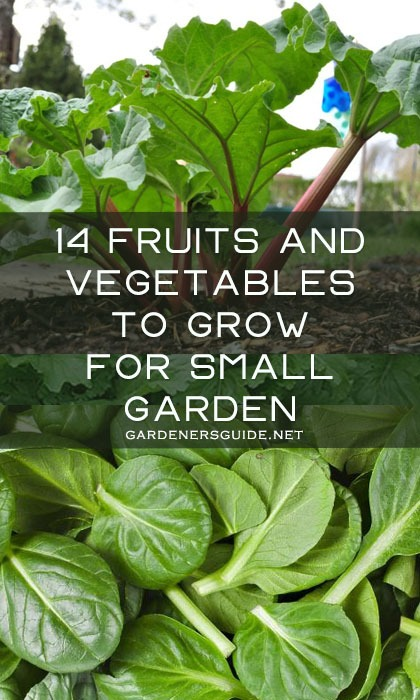 14 Fruits And Vegetables To Grow For Your Small Garden