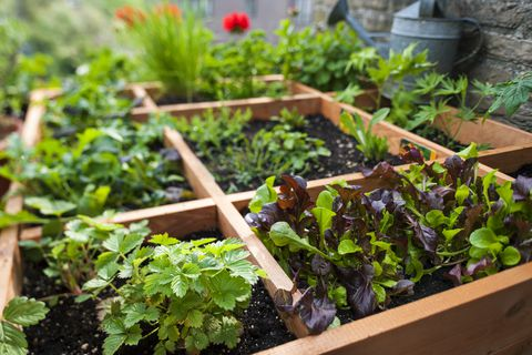 square foot gardening by planting flowers herbs and news photo 584618354 1532960706 - Square Foot Gardening: Preparing Your New Vegetable Garden