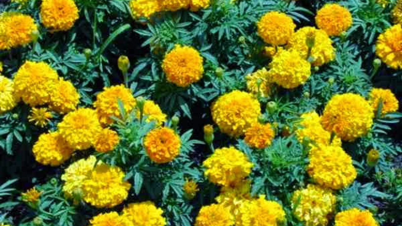 Best Plants That Repel Snakes - Gardeners' Guide