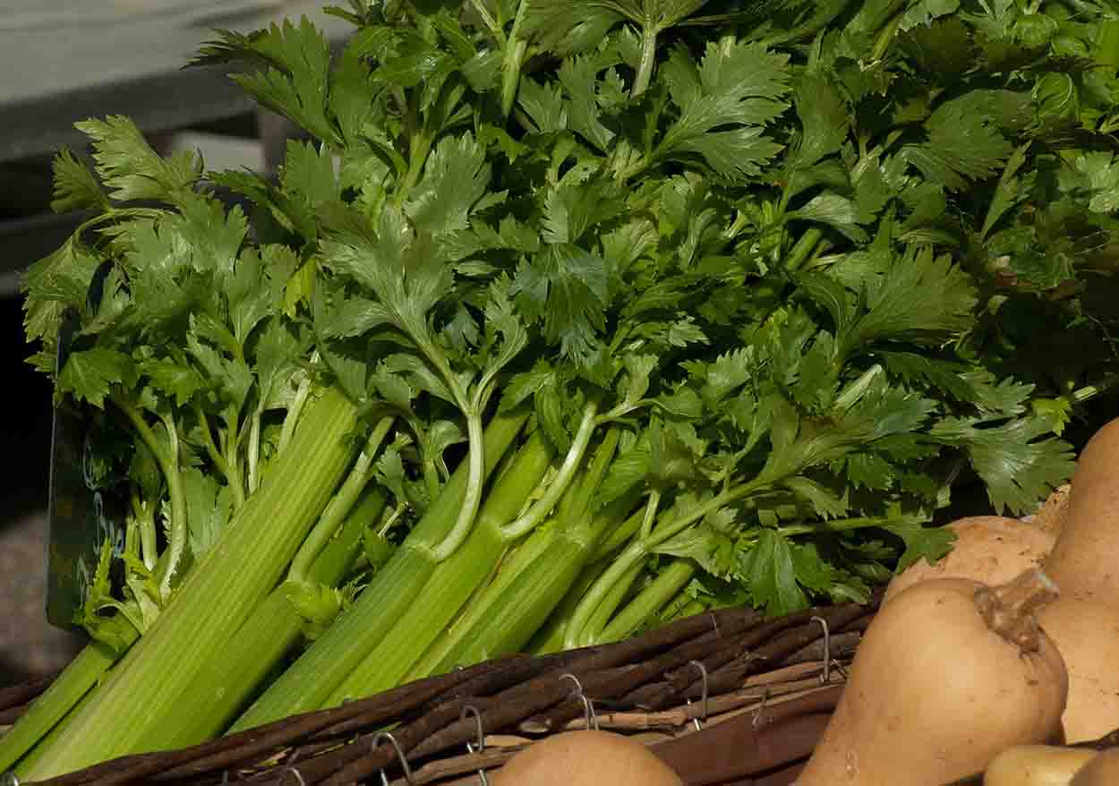 tips-for-growing-celery