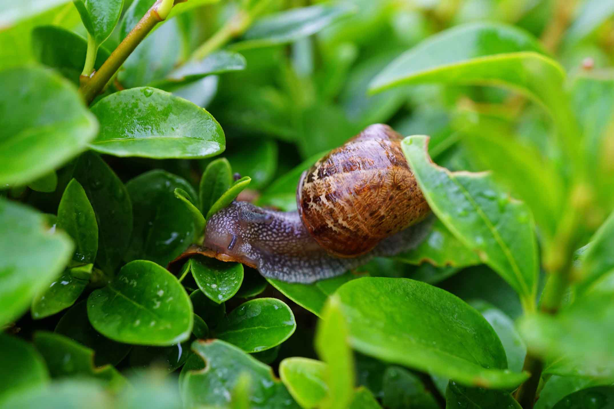 how-to-keep-snails-and-slugs-out-of-your-garden